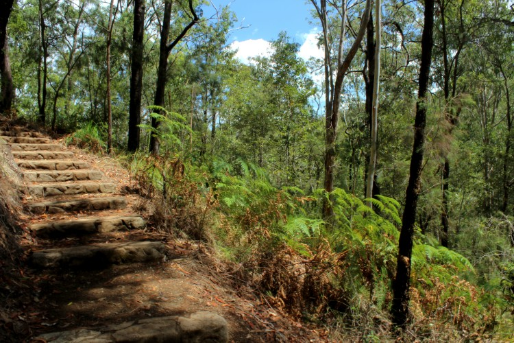 Steps along the walking trail at Glass House Mountains lookout