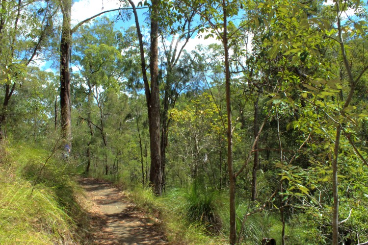 The walking trail at Glass House Mountains lookout.