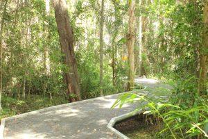 boardwalk at Maroochy Wetland Sanctuary