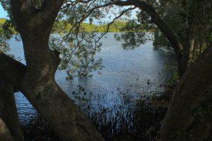 Maroochy River at Maroochy Wetland Sanctuary