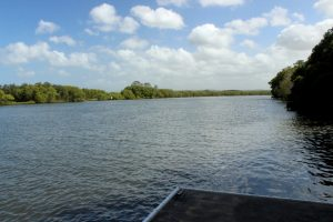pontoon on Maroochy River at Maroochy Wetland Sanctuary